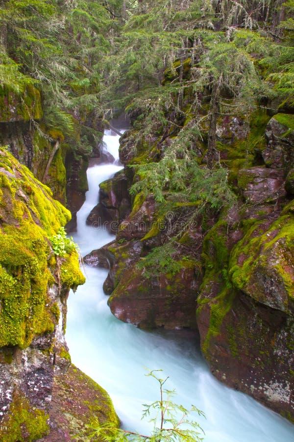 Lawinen-Schlucht im Glacier Nationalpark lizenzfreies stockfoto
