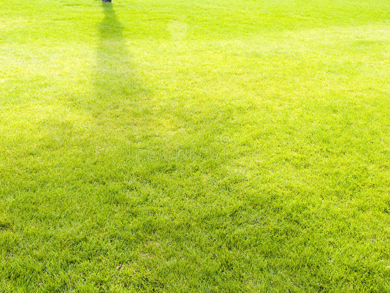 Lawn. From a green grass royalty free stock photography