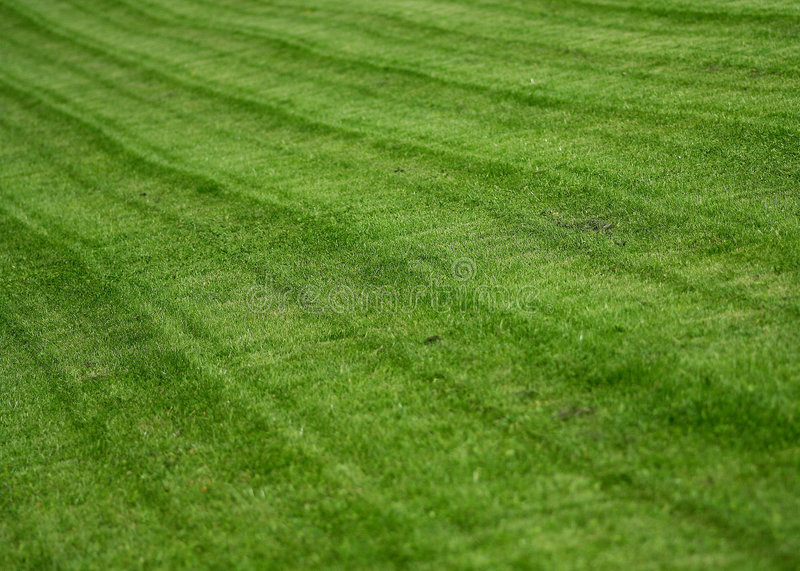 The lawn royalty free stock image