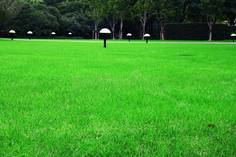 Download A lawn stock photo. Image of trip, grass, scenery, light - 18586678