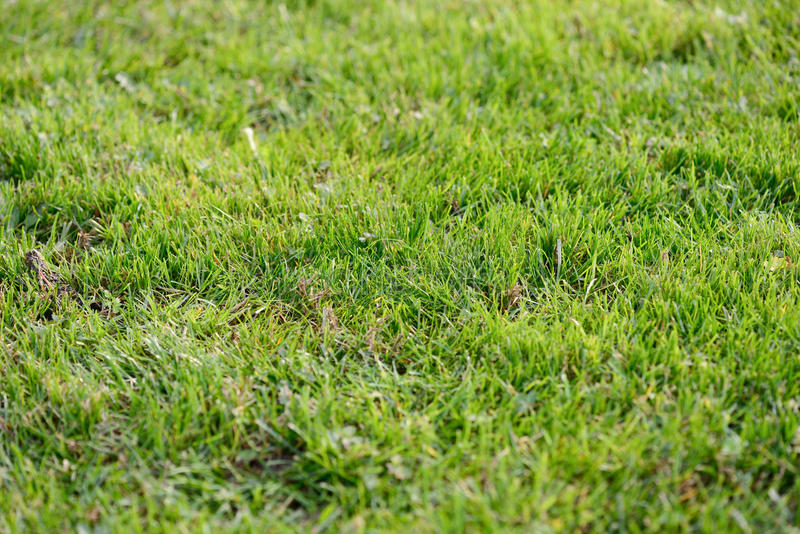 Download Lawn Royalty Free Stock Photography - Image: 28157897