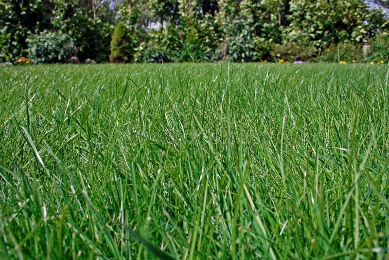 Download Lawn stock photo. Image of grassy, nurture, daytime, nobody - 9678076