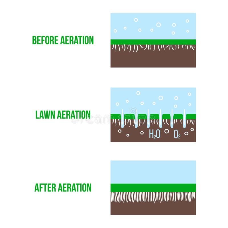 Lawn aeration stage illustration. Gardening grass lawncare, landscaping service. Vector isolated on white vector illustration