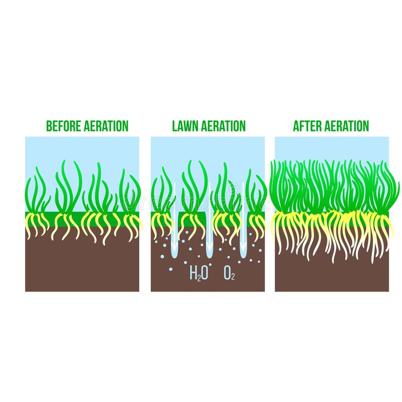 Lawn aeration stage illustration. Gardening grass lawncare, landscaping service. Vector isolated on white. Background stock illustration