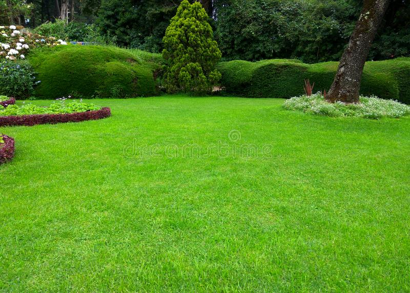 Lawn, Beatiful green grass garden stock images