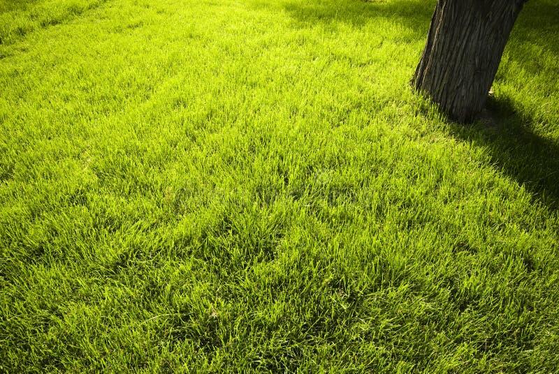 Lawn In A Botanical Garden Stock Photos