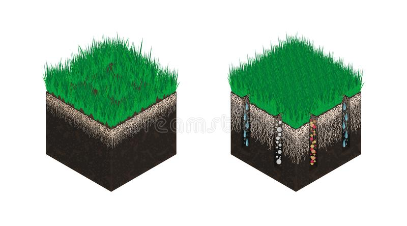 Lawn care, soil isometry, stages before and after aeration. Effect on the intake of substances - water, oxygen and stock illustration