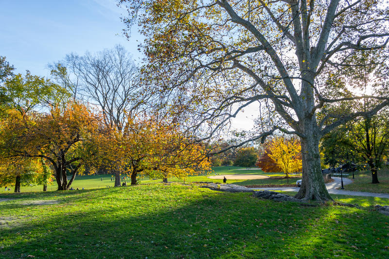 Lawn in Central Park by the Upper East Side in 100th street royalty free stock images