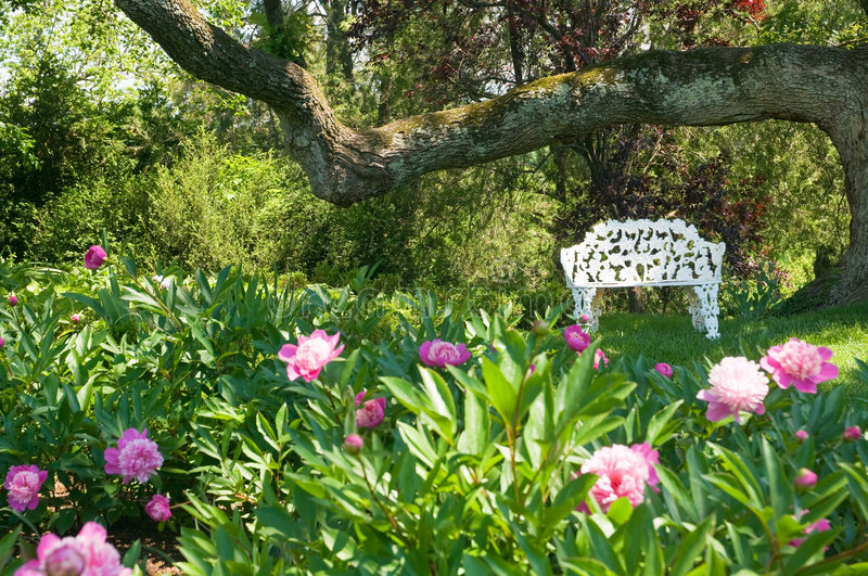 Lawn chair near flower bed. A view of a white wrought iron lawn chair under a huge tree near a flower bed with blooming spring peonies stock image