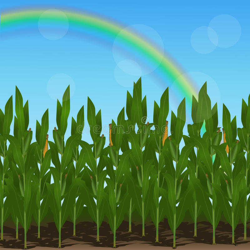 Lawn with corn and rainbow. On a blue background vector illustration