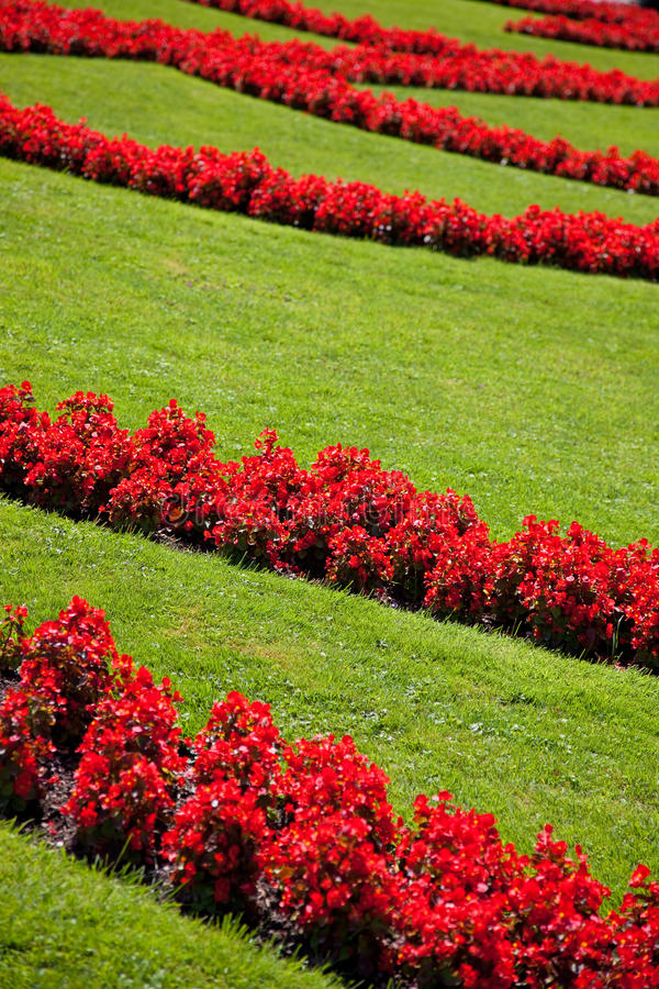 Download Lawn with flowers stock photo. Image of flowerbed, grass - 13456494