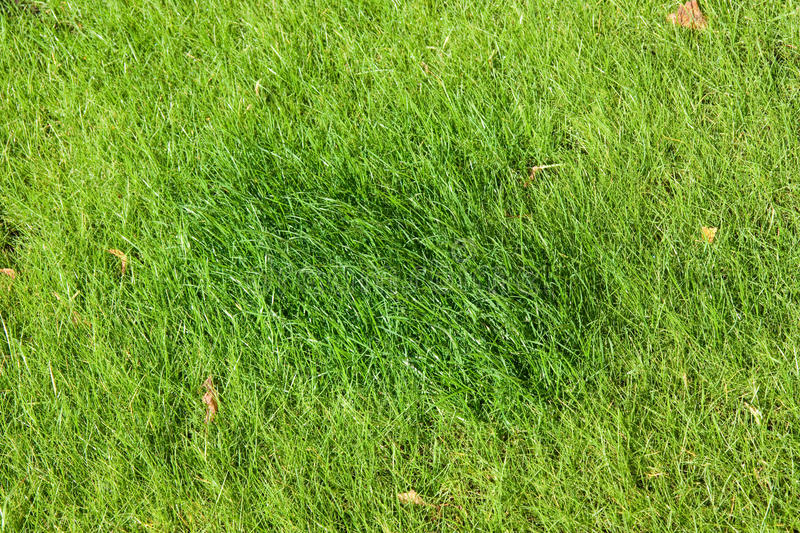 Download Lawn Grass Royalty Free Stock Photos - Image: 13973908