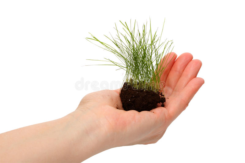 Download Lawn grass in a human hand stock image. Image of closeup - 18821307