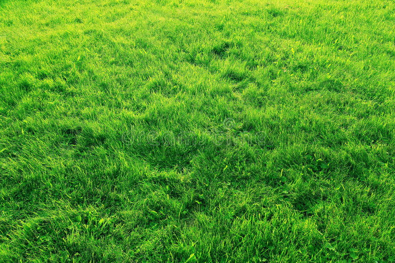 Lawn of green grass texture. Background stock photo