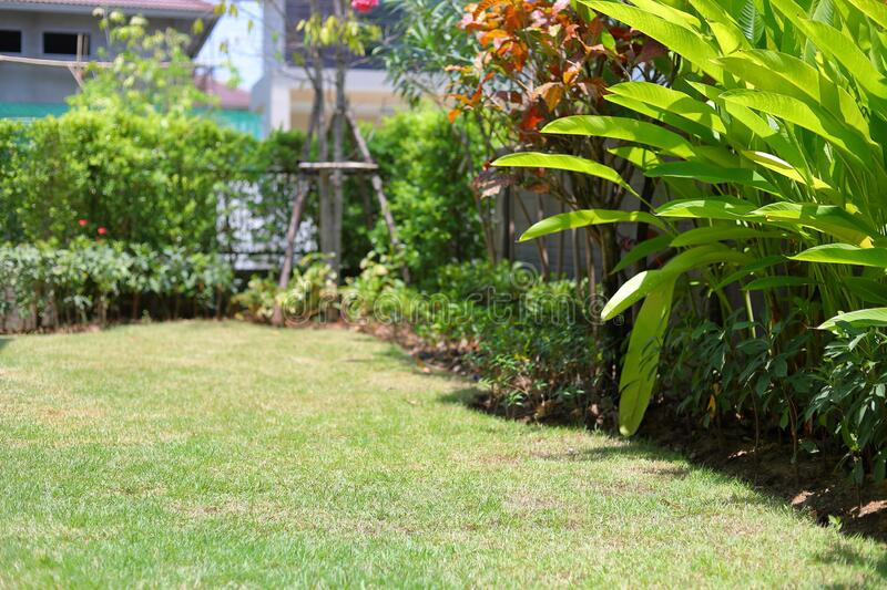 Lawn landscaping garden with green grass turf and small plant decoration. Outside home royalty free stock photos