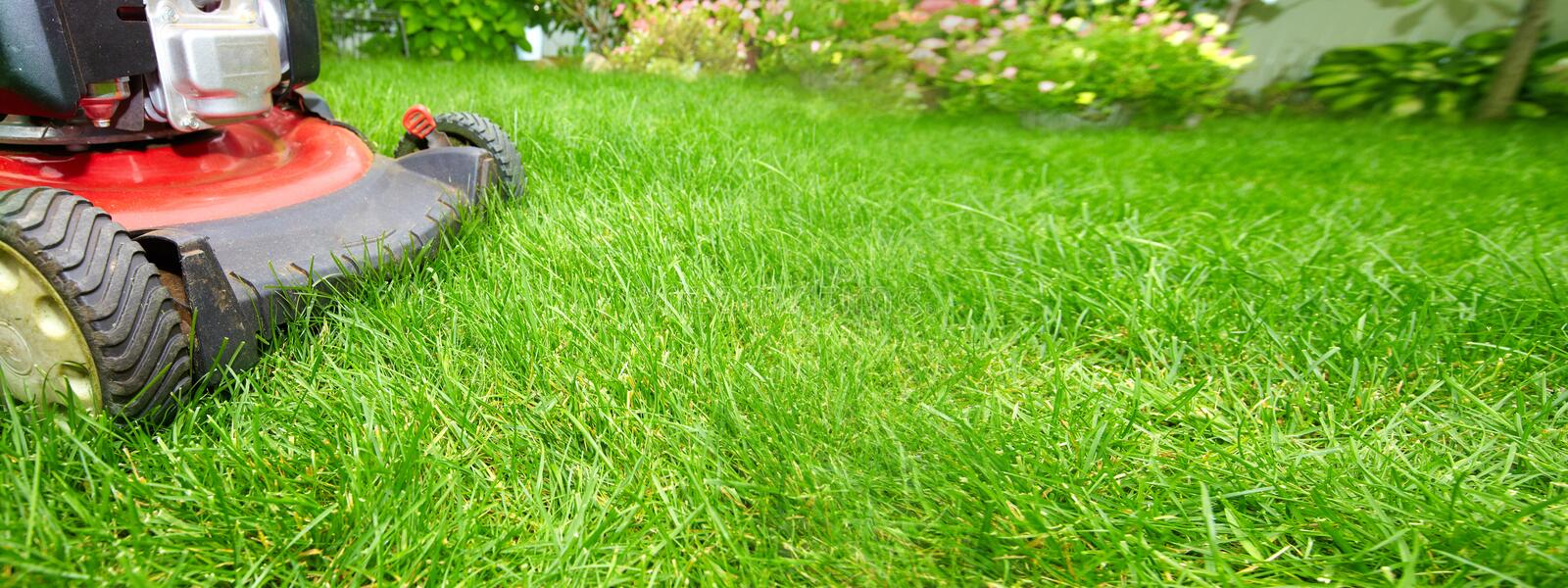 Lawn mower. Cutting green grass in backyard background royalty free stock photo
