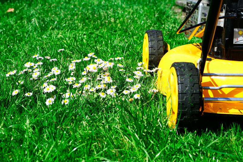 Download Lawn mower and daisies stock photo. Image of outdoor, cutter - 863058