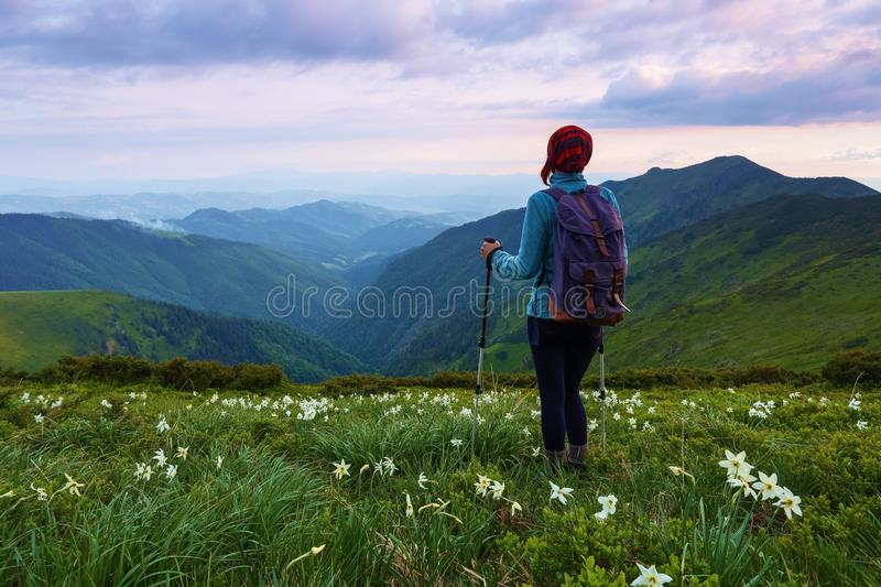 On the lawn with the nice white daffodils the girl stays with tracking sticks and back sack watching at the endless vastness. stock image