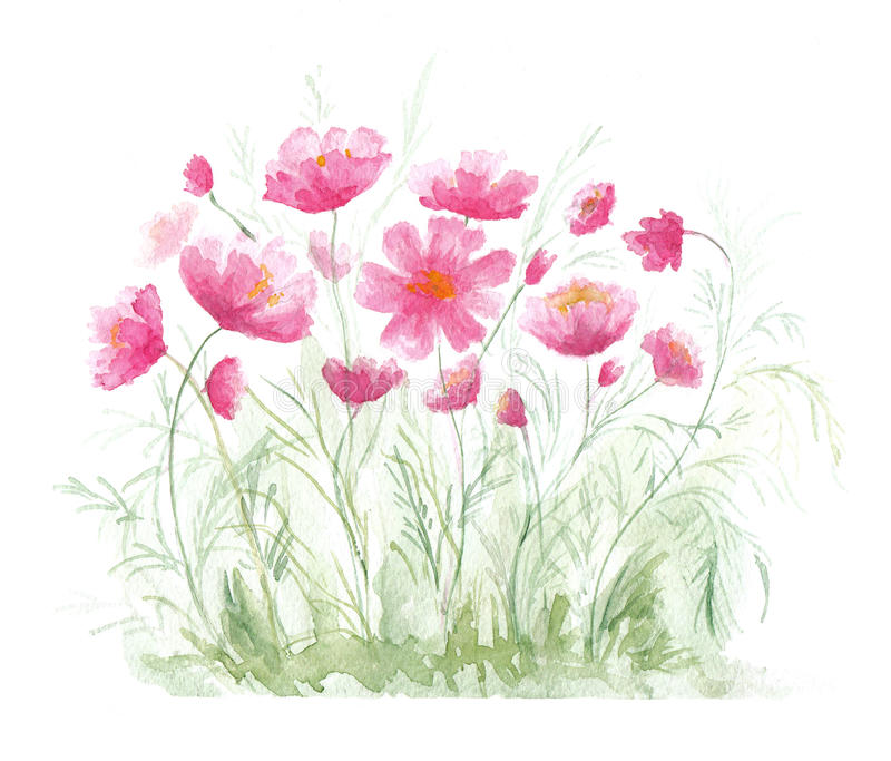Lawn with red poppies. Watercolor illustration on white background vector illustration