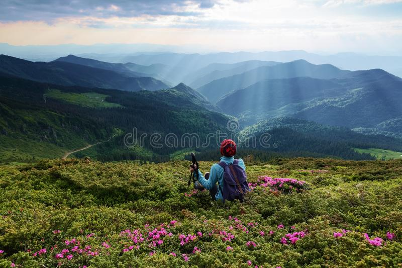 On the lawn among the rhododendron flowers the tourist girl is sitting with the back sack. The landscape with the great mountains. royalty free stock image