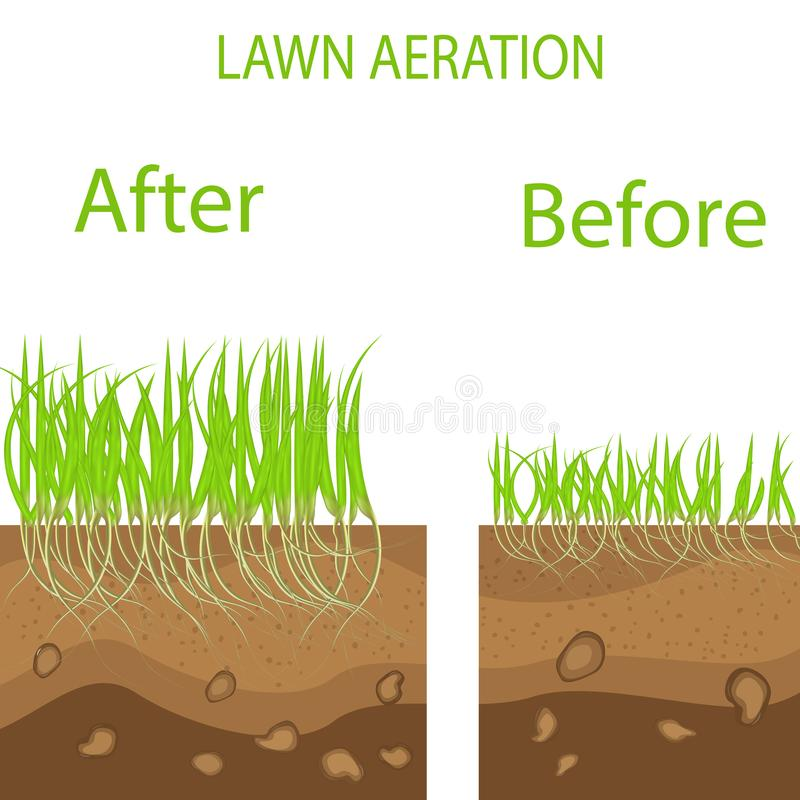 Lawn stage aeration illustration. Gardening of lawns, landscape design services. Vector on white background.Green lawn with on the. Ground in the context of vector illustration