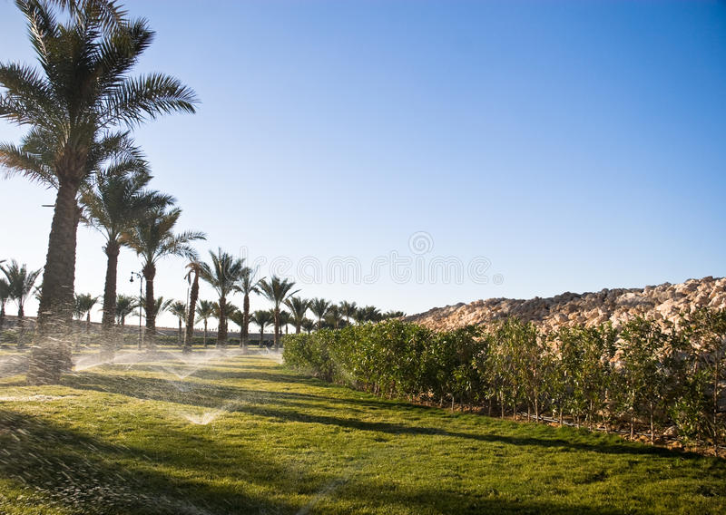 Download Lawn at sunshine stock photo. Image of picture, lawn - 26023018