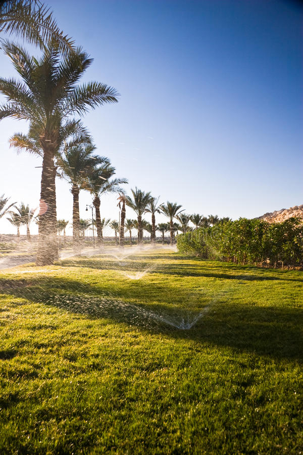 Download Lawn at sunshine stock photo. Image of picture, africa - 26023024