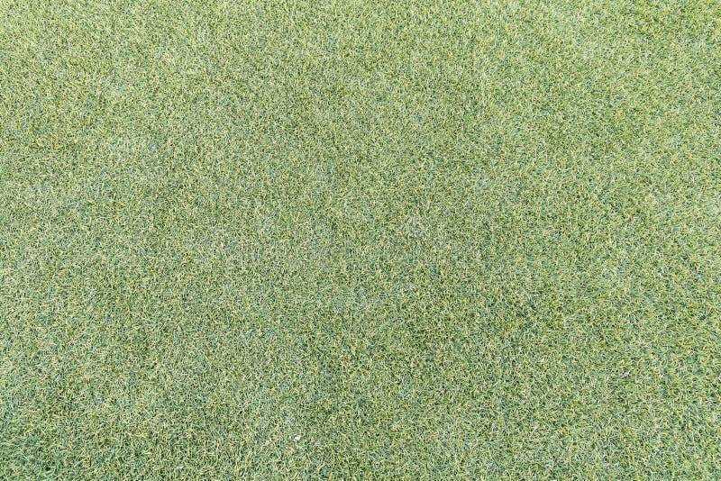 Lawn Texture royalty free stock photos