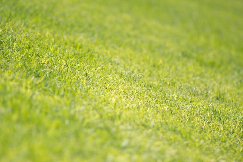 Lawn texture closeup royalty free stock image