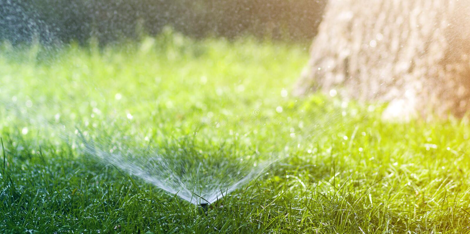 Lawn water sprinkler spraying water over lawn green fresh grass in garden or backyard on hot summer day. Automatic watering stock image