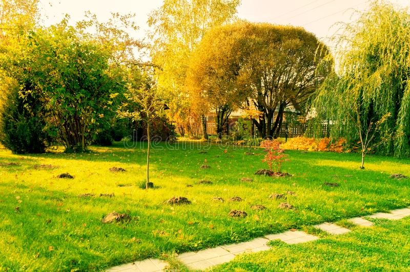 Lawn on which pits are dug. Pest control. royalty free stock images