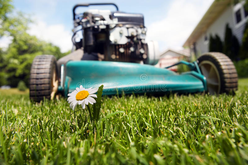 Download Lawnmower stock photo. Image of summertime, turf, lush - 13917612