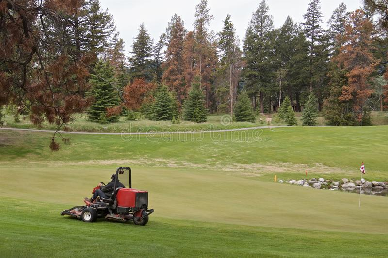 Lawnmower on the golf course surrounded by coniferous forest royalty free stock photography