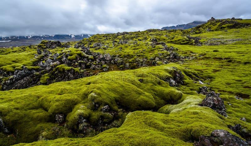 Lawowy pole z zielonym mech w Iceland zdjęcie royalty free