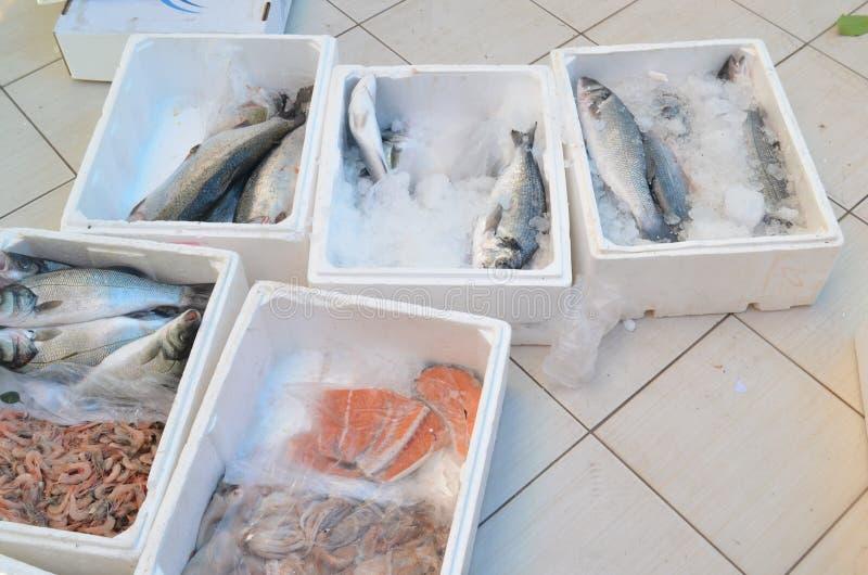 Lax och annan fisk i plast- ask på ett golv i den antalya för fiskmarknad kalkon arkivfoton