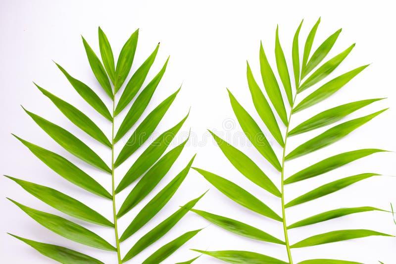 Lay-out van tropische bladeren op een witte achtergrond Minimaal de zomer exotisch concept met exemplaarruimte Vlak leg, hoogste  stock illustratie