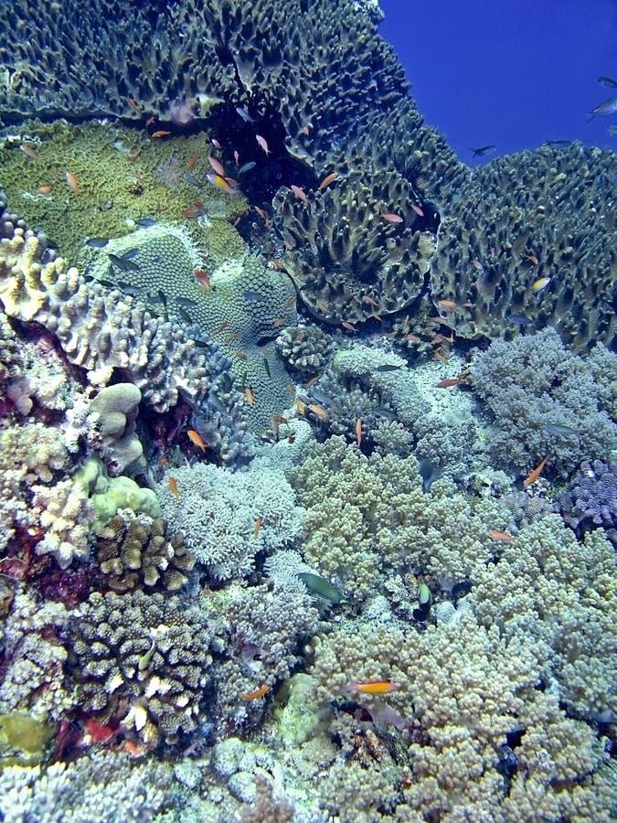 Download Layang-Layang Coral Reef Stock Photography - Image: 4419142