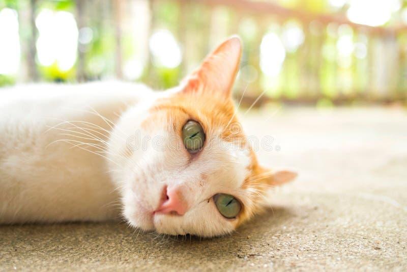Laydown do gato no assoalho do cimento fotos de stock royalty free
