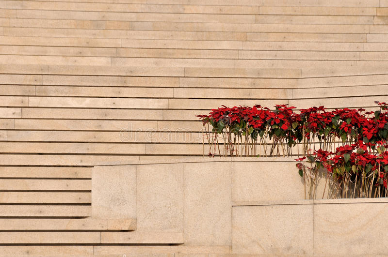 Download Layer Stage And Plant With Red Flower Royalty Free Stock Photo - Image: 29029925