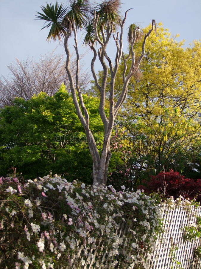 Layerd żywopłotu rodzajowa roślinność fotografia stock