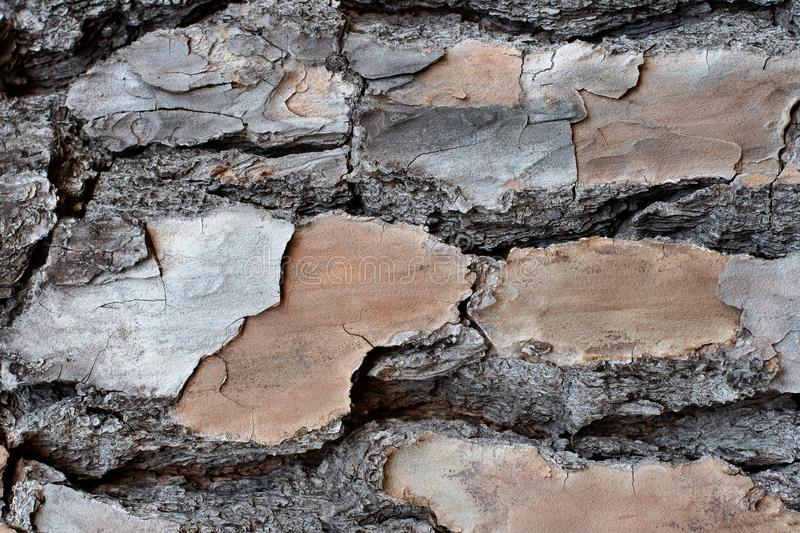 Layered Bark of a Pine Tree Background. ~BARK OF A TREE~ Layered and Textured Bark of a Pine Tree royalty free stock photography