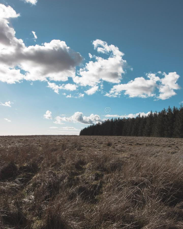 Layers. Blue sky just outside a forest royalty free stock images