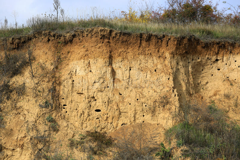 LAyers of soil. Soil with different layers visible and grass on top royalty free stock photo
