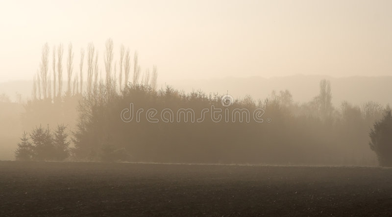 Layers of trees in the mist royalty free stock image