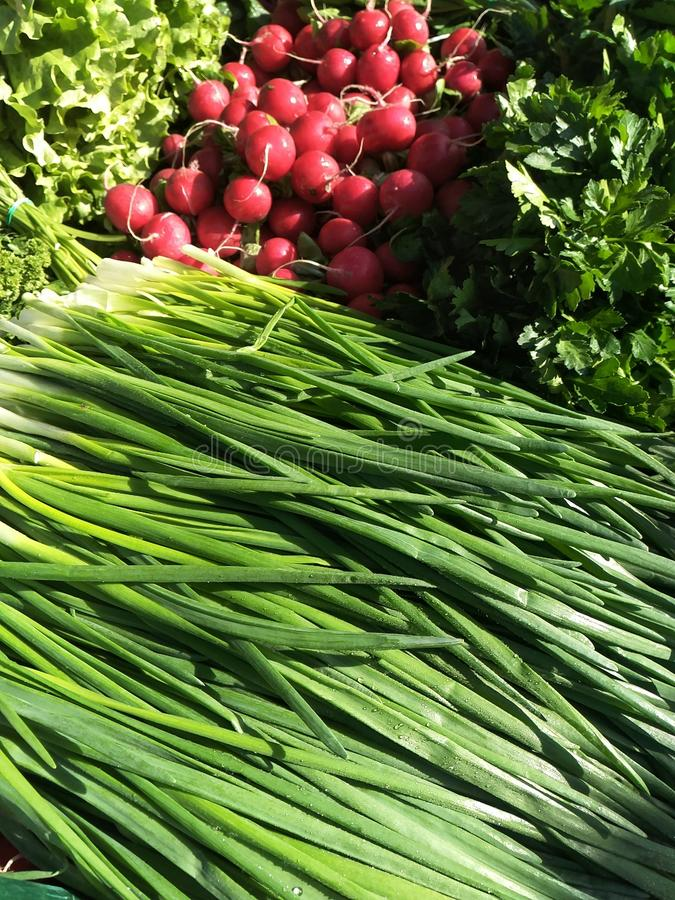 Laying out chives, radishes and other greens royalty free stock photo