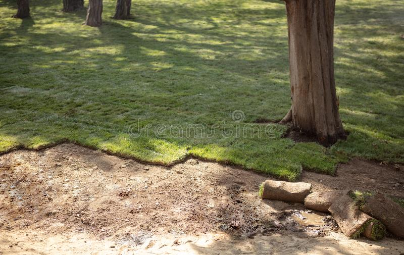 Laying sod for new garden lawn. Natural Grass Turf Professional Installer. Gardener Installing Natural Grass Turfs Creating Beautiful Lawn Field stock photo