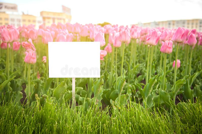 Layout plates on the background of flowers stock image