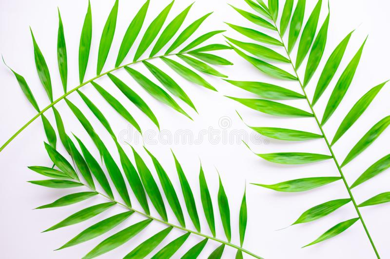 Layout of tropical leaves on a white background. Minimal summer exotic concept with copy space. Flat lay, top view.  vector illustration