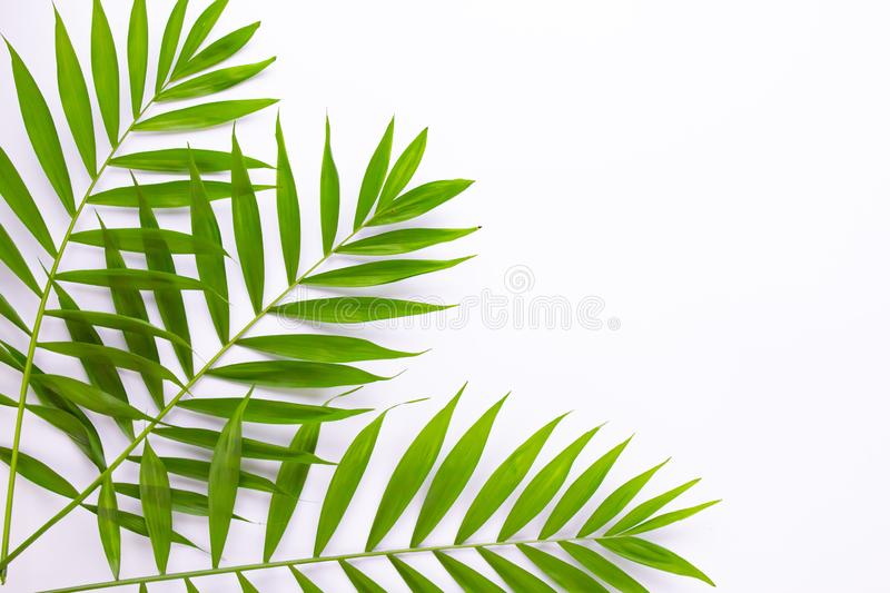 Layout of tropical leaves on a white background. Minimal summer exotic concept with copy space. Flat lay, top view.  royalty free illustration