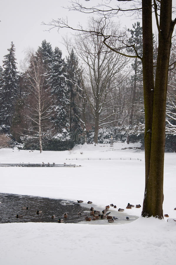 Lazienki Park in winter. Poland, Warsaw stock photography